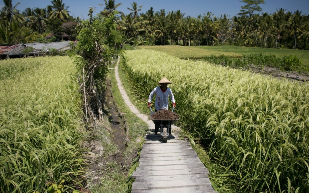 Ubud : where to stay, where to eat and what to do