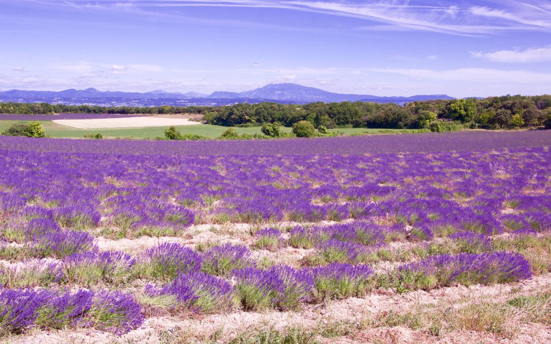 Cycling in Provence on the Lavender Route : the Provencal Drome and the Enclave of the Popes