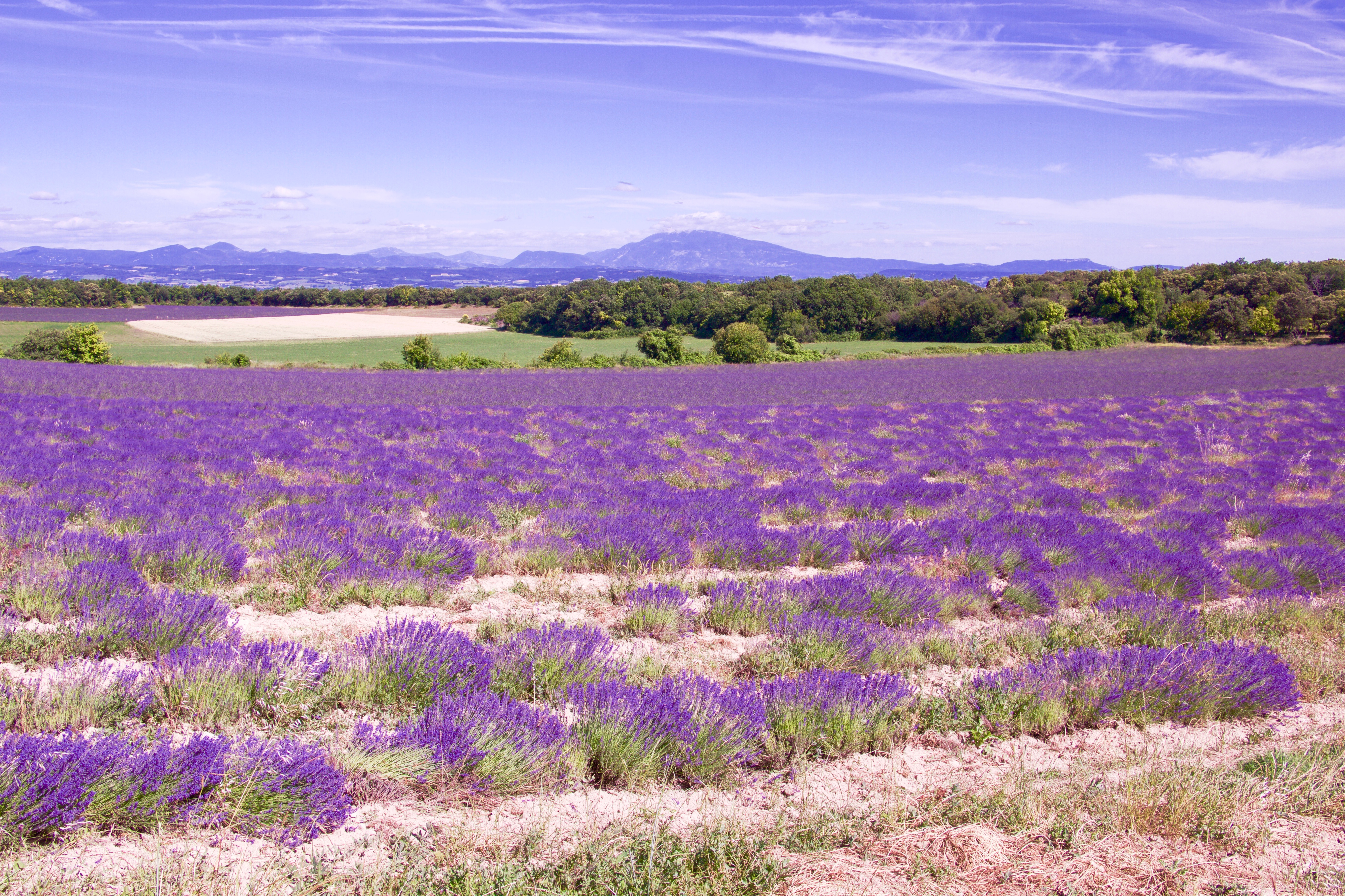 Cycling in Provence : the Lavender Route