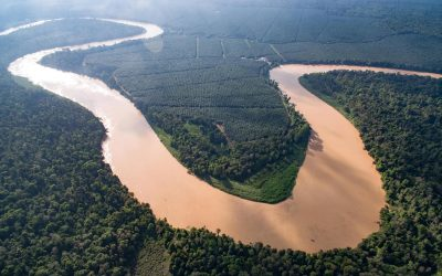 How to Organise a Kinabatangan River Cruise on a Budget (DIY)