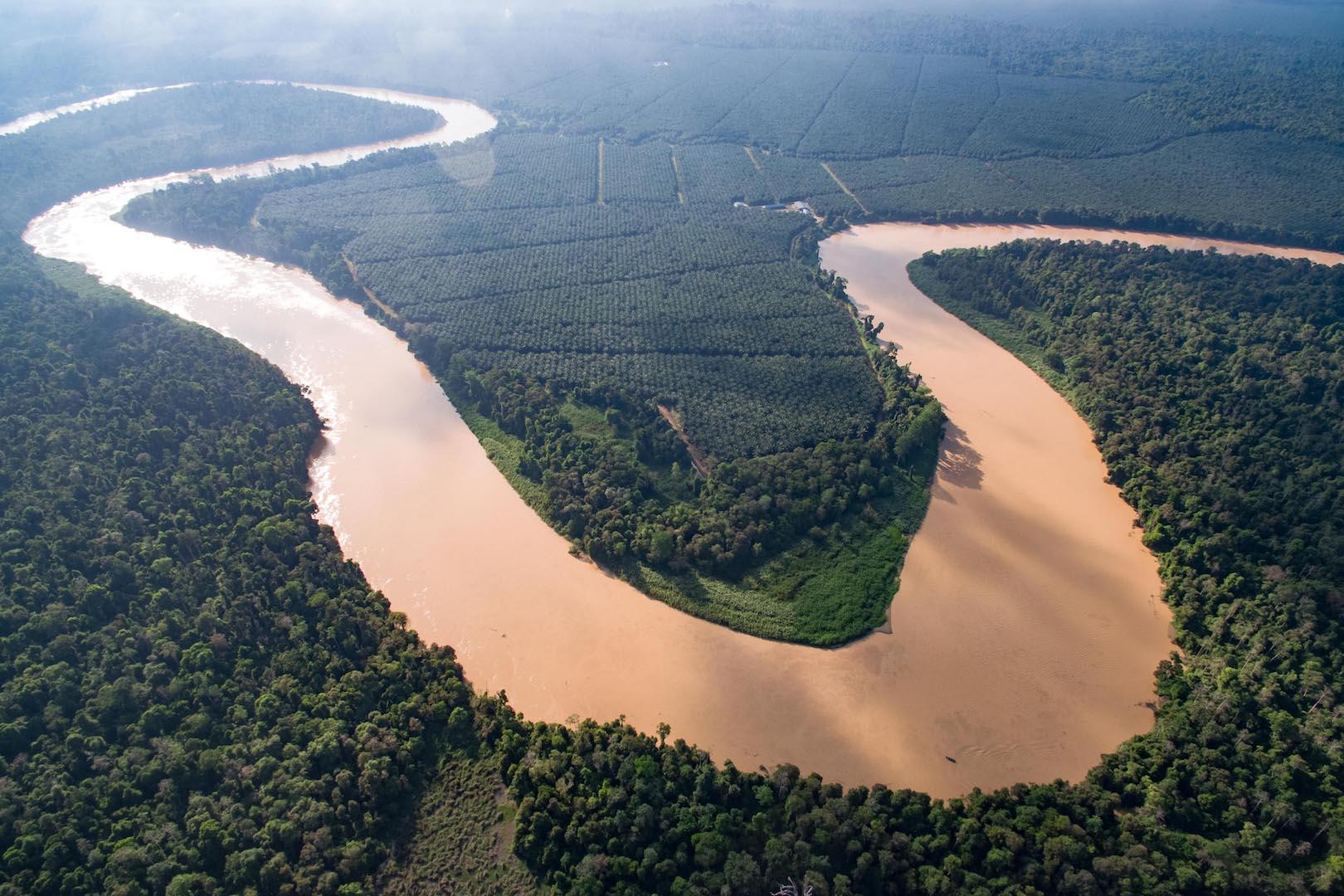 Sabah Borneo Kinabatangan River Cruise On A Budget Diy