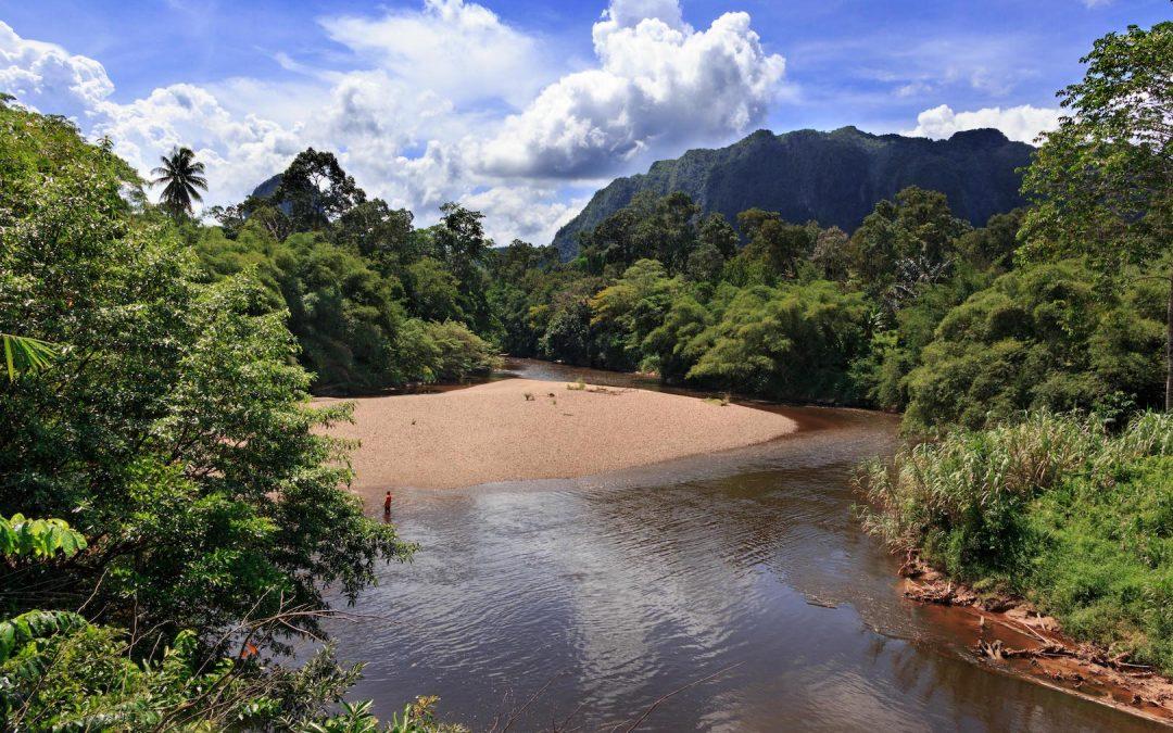 Bamboo Rafting & Orangutan Tour with Semadang Kayaking in Kuching, Borneo